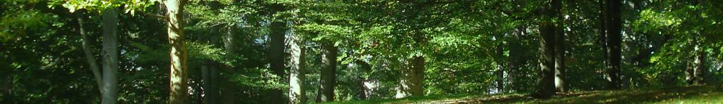 GFAO – Gestion Forestière Assistée par Ordinateur